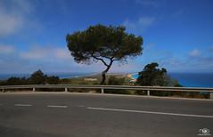 _IMG_2753 (Kinga Nemeth) Tags: sea tree bicycle island cycling islands spain espana ciclismo formentera isla isola balearic balears illes