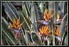 Flower_9505d (bjarne.winkler) Tags: flowers green sacramento too includes