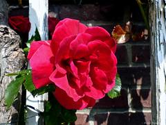 Oud & Nieuw (Omroep Zeeland) Tags: ros schouwenduiveland padmos