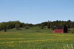 La grange rouge, Kingsbury, Qc (E-M Costard) Tags: old canada building barn rural village quebec shack campagne ferme grange cabane estrie btiments rurale cantonsdelest evemarie