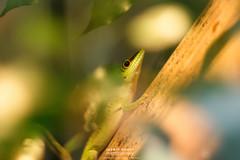green thumb (water wasser) Tags: zoo frankfurt terrarium frankfurtammain echse reptil ffm zoofrankfurt exotarium