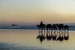 golden hour (krllx) Tags: africa marokko beach camels coast essaouira fishingvillage habor light lights menneske morocco ocean people reflection sand shadows silhouettes solnedgang street streetphotography streetphoto sundown sunset water dsc03881201603071