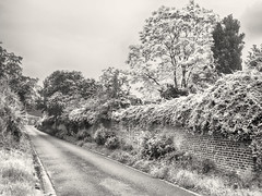 The Wall (enneafive) Tags: street trees light snow green nature wall ir bricks olympus foliage infrared omd em5