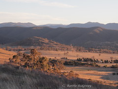 Evening light, Murrumbidgee Valley, from Cooleman Ridge, Canberra (BRDR images) Tags: australia canberra australianlandscape eveninglight australiancapitalterritory canberranaturepark murrumbidgeevalley coolemanridgecanberra ourfragileearth