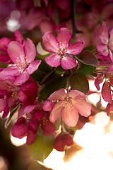 Spring Campus Flowers-20