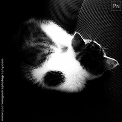 Patuska is charging the batteries (Pedro Nogueira Photography) Tags: pet pets animal cat photography kitty kittens domestic gato mobilephone telemóvel doméstico patuska iphone5 iphoneography pedronogueira pedronogueiraphotography