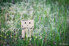 (yulianna_me) Tags: toy danboard