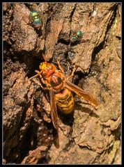 Gelb Rot Orange vorsicht ich bin gefhrlich (rapp_henry) Tags: nikon makro insekt farbig d800 tamron90mm28