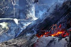 still burning (alden0249) Tags: australianlandscape bidjigalreserve burning bushfire