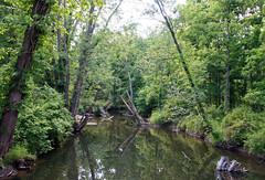Appalachian Trail Boardwalk - View from a Bridge (dlberek) Tags: nature landscape newjersey swamp wetlands boardwalk appalachiantrail sussexcounty