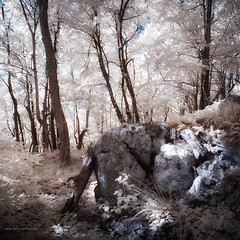 Sunday on Klek - part IV (elkarrde) Tags: pink blue autumn trees sky sun mountain tree grass forest woods pentax sunday croatia sunny infrared 1855 klek digitalinfrared twop 2011 720nm da1855 tianya k100d justpentax pentaxk100dsuper k100ds pentaxart smcpentaxda1855mm13556 autumn2011 tianyair720
