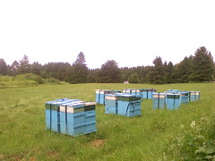 "honey tree apiary bee hives • <a style=""font-size:0.8em;"" href=""http://www.flickr.com/photos/75400798@N04/6787508594/"" target=""_blank"">View on Flickr</a>"