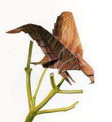 Origami création - Didier Boursin - Aigle