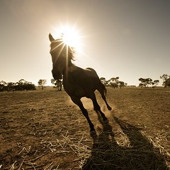 fearless (Floating Lantern) Tags: morning horse field running dust gallop