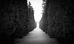 tunnel of trees (gato-gato-gato) Tags: street leica winter bw white black blanco nature digital 50mm schweiz switzerland abend flickr suisse f14 strasse zurich negro natur streetphotography rangefinder zrich svizzera weiss zuerich manualfocus asph schwarz mrz onthestreets m9 zri naturephotography feierabend mittwoch sihlfeld zurigo kreis4 manualmode friesenberg zueri summiluxm strase outdoorphotography wiedikon kreis3 manuellerfokus gatogatogato leicasummiluxm50mmf14asph leicam9 altwiedikon gatogatogatoch wwwgatogatogatoch