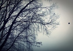 Crow (Electra_star) Tags: winter tree nature beauty silhouette dark branches crow crows