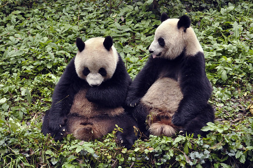 Pandas Revisited