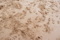 (steve p2008) Tags: uk winter england beach coast seaside sand footprints lincolnshire cleethorpes