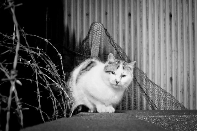 Today's Cat@2012-02-16