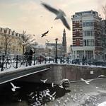 Dutch woman helping birds survive the harsh Winter