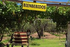 Corkscrewing Around, Mendoza