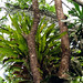 Giant Epiphyte