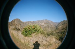 Harding Canyon with Christmas Berry (EmperorNorton47) Tags: california film analog photo exterior lofi fisheye 400asa chaparral toyon christmasberry hardingtrucktrail kodakportra clevelandnationalforest modjeska hardingtrail