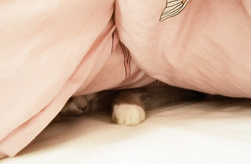 Hidden?