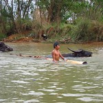 "Boy Bathing with Water Buffalo <a style=""margin-left:10px; font-size:0.8em;"" href=""http://www.flickr.com/photos/14315427@N00/6925115376/"" target=""_blank"">@flickr</a>"