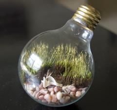 Light Bulb Terrarium (Ragnvaeig) Tags: moss gardening projects recycle terrarium reflectedselfportrait upcycle