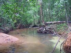 Sinharaja Rain Forest in Sri Lanka