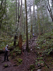 The enchanted forest (Urban Disturbance) Tags: usa washington hiking pacificnorthwest oysterdome chuckanutdrive chuckanutmountains