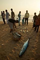 Chavakkad Beach Kerala (Ashit Desai) Tags: sea india fish beach boat fishing fisherman fishermen south kerala guruvayoor guruvayur desai ashit chavakkad chavakad aashit