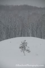 20120303_9294b (Ken Scott) Tags: winter usa snow march michigan lakemichigan greatlakes 2012 freshwater voted leelanau sbdnl sleepingbeardunenationallakeshore mostbeautifulplaceinamerica blizzard2012 kenscottphotography kenscottphotographycom