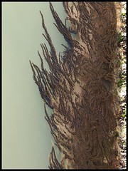 growing (Anna Che) Tags: venice italy italia waters venezia