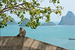 Monkey Bay (Ursula in Aus (Away)) Tags: wild mountains animal thailand monkey view  prachuapkhirikhan bayofthailand  earthasia totallythailand  khaochongkrajoki