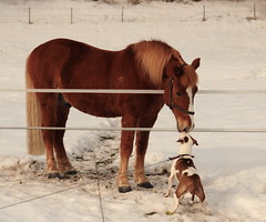 Tesla with neighbour (Mika*S) Tags: horse dog pitbull apbt 5for2