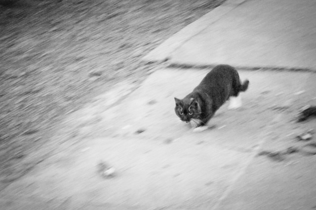Today's Cat@2012-03-21