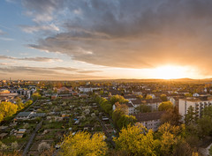 Sunset (Philipp Klinger Photography) Tags: city light sunset urban tree nature germany garden spring nikon frankfurt d800 d7000