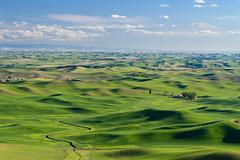 Palouse-1.jpg (Michael J. Schultz) Tags: washington farm wheat rollinghills palouse easternwashington steptoebutte
