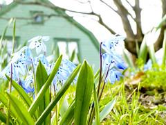 Finally spring (realdauerbrenner) Tags: city travel spring reisen sweden stockholm schweden tourist stan stadt sverige stad resa frhling 2014