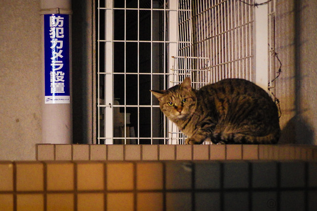 Today's Cat@2014-04-22