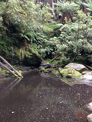 lorne 380 (raqib) Tags: holiday nature water trekking trek waterfall hiking victoria hike falls bushwalking vegetation rc lorne iphone erskine erskinefalls waterfallaustralia