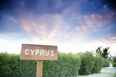 (-Filippos-) Tags: park cyprus hedge 2016