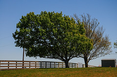 Wind Blown Trees (Autophocus) Tags: ranch trees rural countryside pond farms wateringhole texashillcountry ruralroad windblowntrees