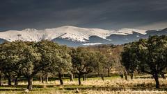 "La mujer muerta (""the dead woman"", Segovia, Spain) (Ignacio Ferre) Tags: espaa mountain snow forest landscape spain quercus nikon nieve paisaje bosque segovia montaa encina encinar comunidaddecastillaylen"