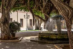 Marsala, Sicily (Ken Barley) Tags: italy fountain sicily marsala moretonbayfig ficusmacrophylla australianbanyan