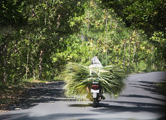 Drive.. (areyarey) Tags: bali areyarey