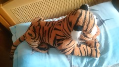 Shere Khan from the new The Jungle Book live action movie (ItalianToys) Tags: toy toys book tiger libro disney plush plushies jungle khan della tigre peluche giocattoli shere giocattolo giungla