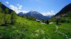 Petit enclos prs des pturages (yoduc73) Tags: montagne alpes jardin savoie vaches champagny tarentaise paturage